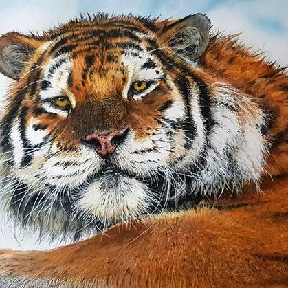 Amur-Tiger-KT1