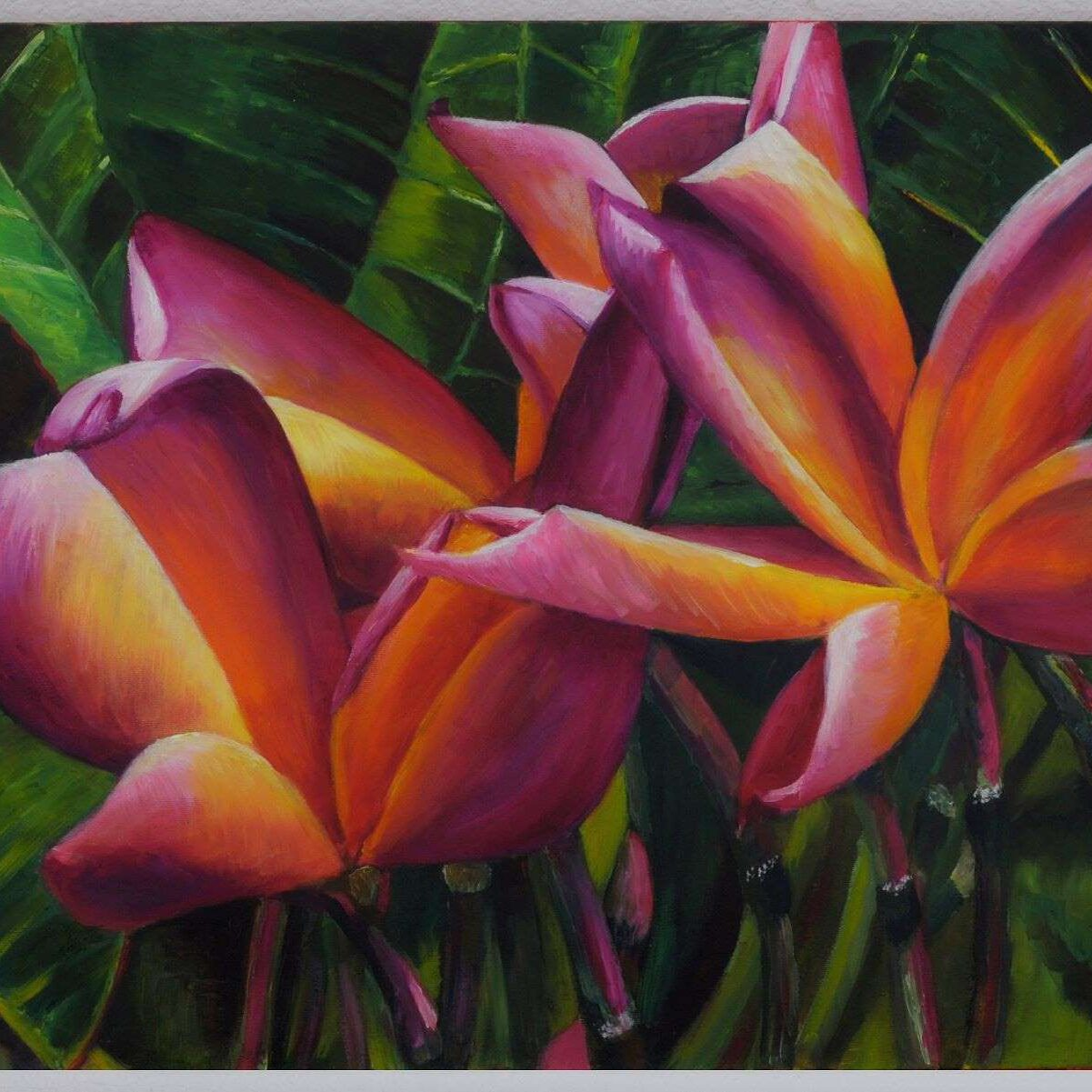 flower, tropical, frangipani
