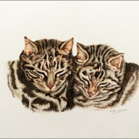 tabby cats small